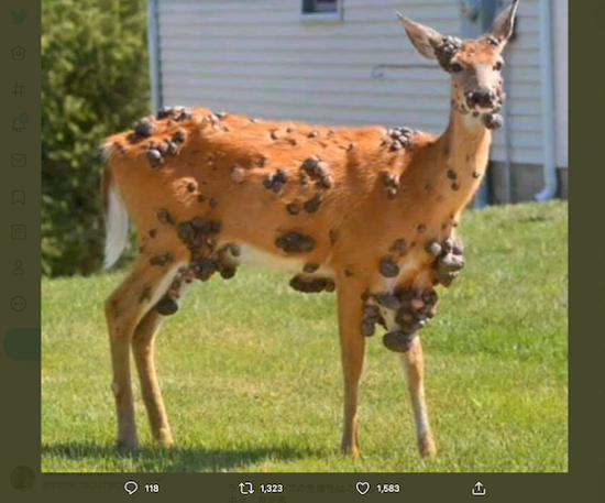 Cross-border misinformation: Herbicide is the cause behind the tumor covered deer